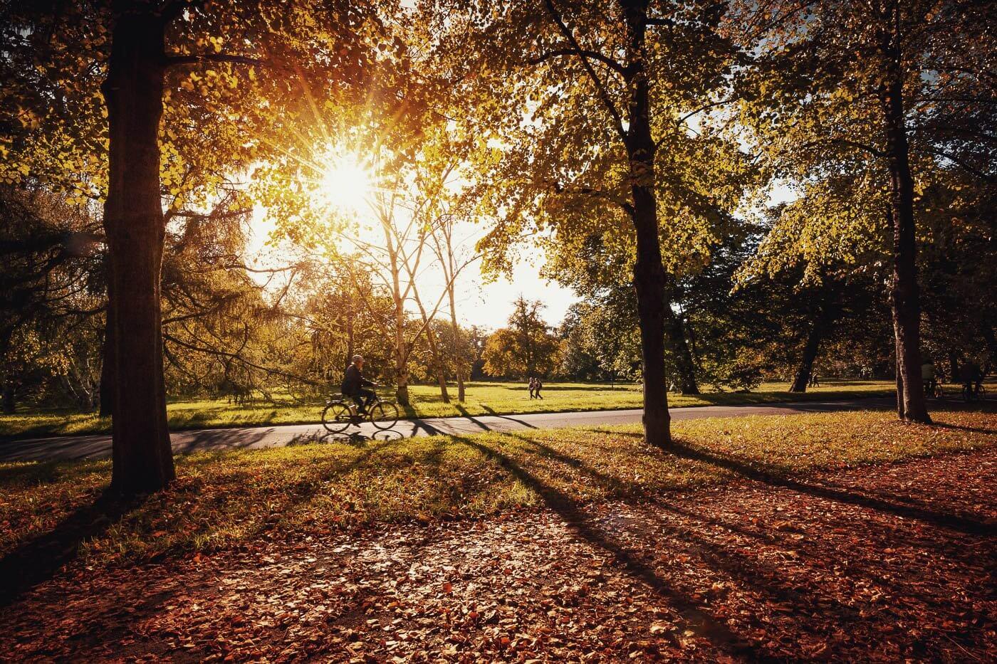 Herbstnachmittag im Georgengarten