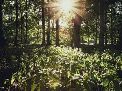 Die letzten Sonnenstrahlen des Tages in der Eilenriede