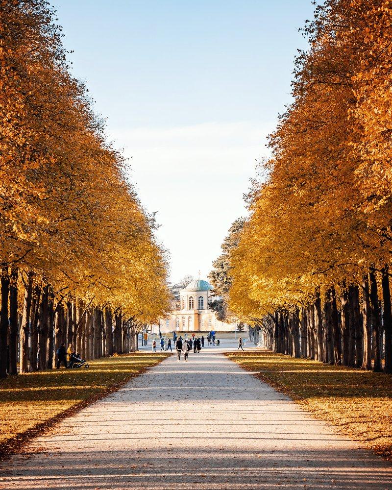 Herrenhäuser Allee im Herbst mit Bibliothekspavillon