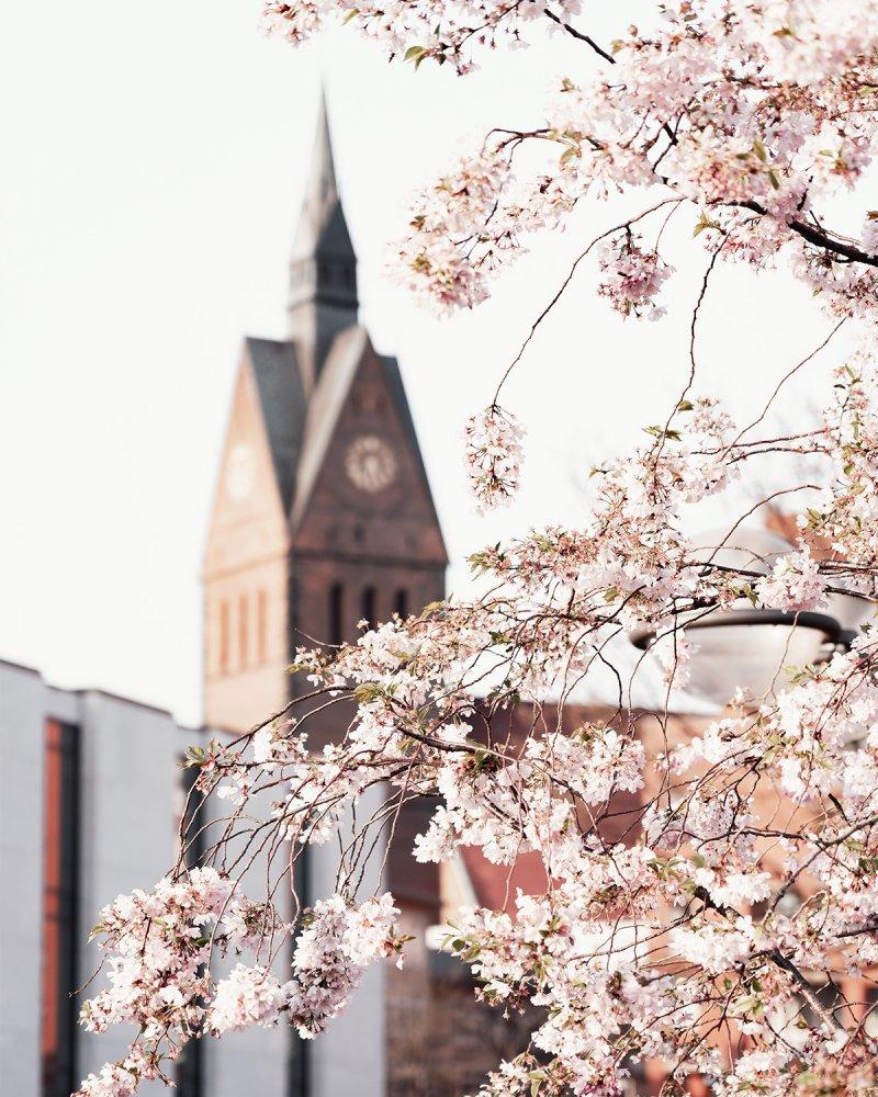 Frühling in Hannover: Blick auf die Marktkirche und den Landtag