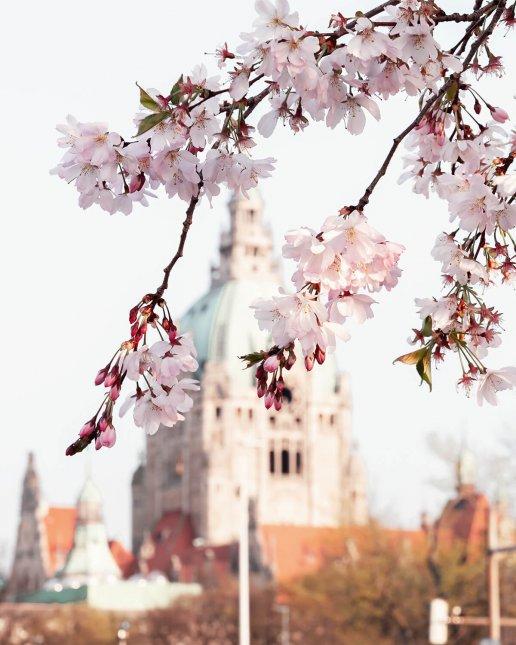 Frühling in Hannover: Blick auf das Neue Rathaus