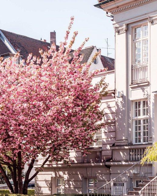 Leisewitzstraße