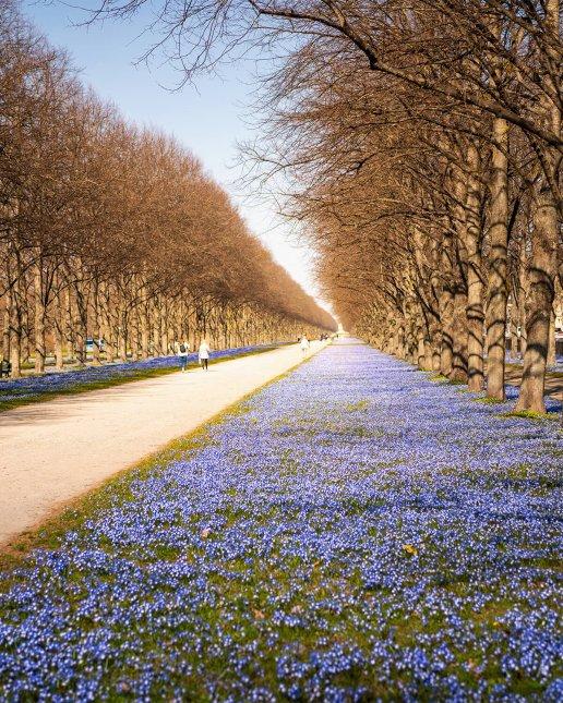 Frühling an der Herrenhäuser Allee im Georgengarten in Hannover
